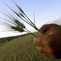 Cerealele se vor scumpi din nou anul viitor, exact când România va trebui să importe masiv