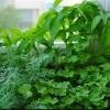 Planta MINUNE la 1 LEU, leac BUN la TOATE: inhibă CANCERUL şi HEPATITA, tratează LITIAZA RENALĂ şi BILIARĂ